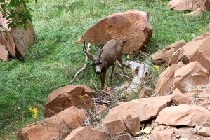 Zion_National_park_3